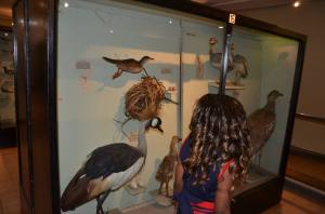 At the bird section of the Nairobi Museum